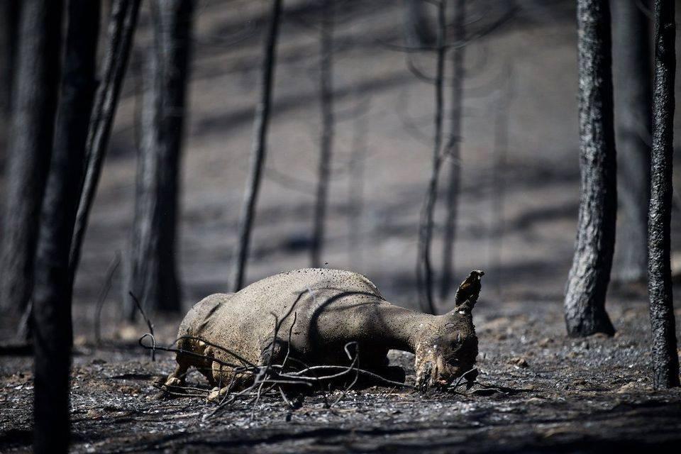 Dear_Burned_Alive.jpg