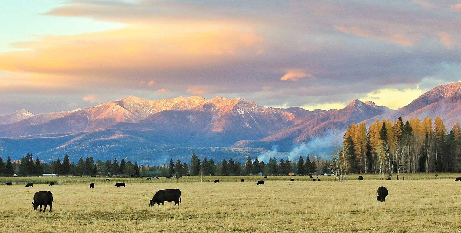 Montana american lands council for Montana ranch house