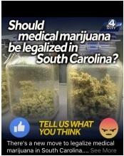 cannabis_poll.jpg