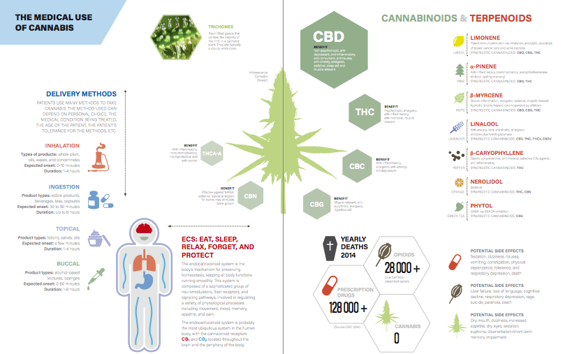 Infographic illustrating medical cannabis usage