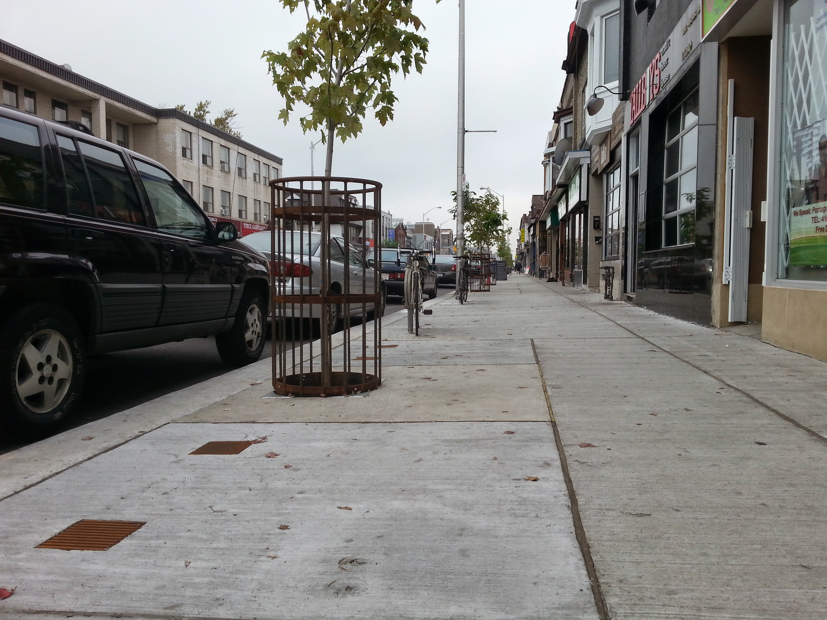 New Bloor Street tree planting, including guards and watering grates