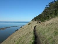 Angie Homola path