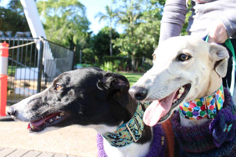 2_Greyhounds.jpg