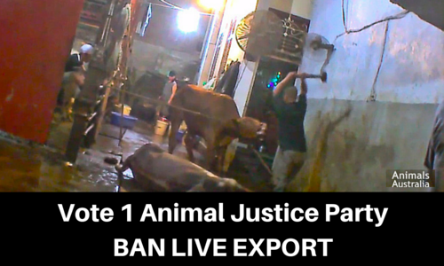 Vote_1_Animal_Justice_Party_Ban_Live_Export.png