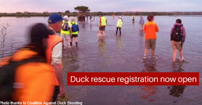 Duck_rescue_registration_now_open.png