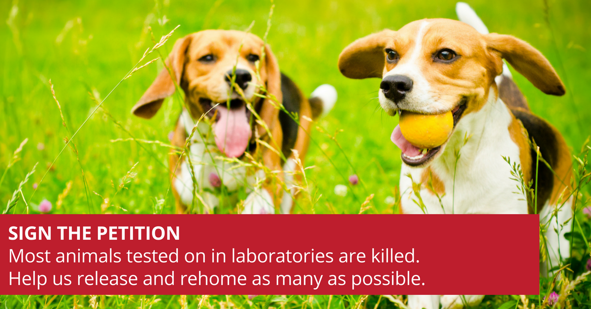 PETITION-_Most_animals_tested_on_in_laboratories_are_killed._Help_us_release_and_rehome_as_many_animals_as_possible..png