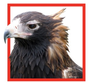 eagle_from_flyer_-_Copy.PNG