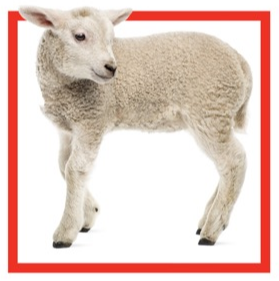lamb_from_flyer.PNG