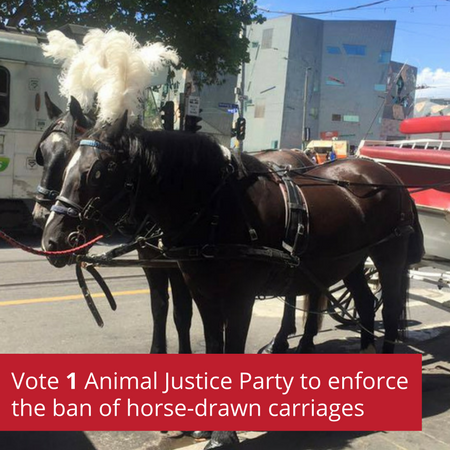 Vote_1_Animal_Justice_Party_to_enforce_the_ban_of_horse_drawn_carriages.png