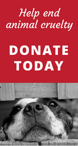 Donate_today_new.png