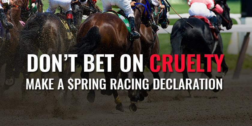 Spring-Racing.jpg