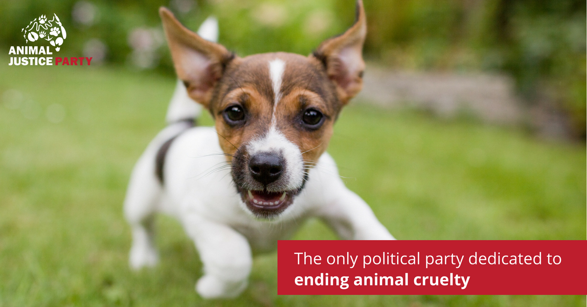 Help_us_end_animal_cruelty_(1).png