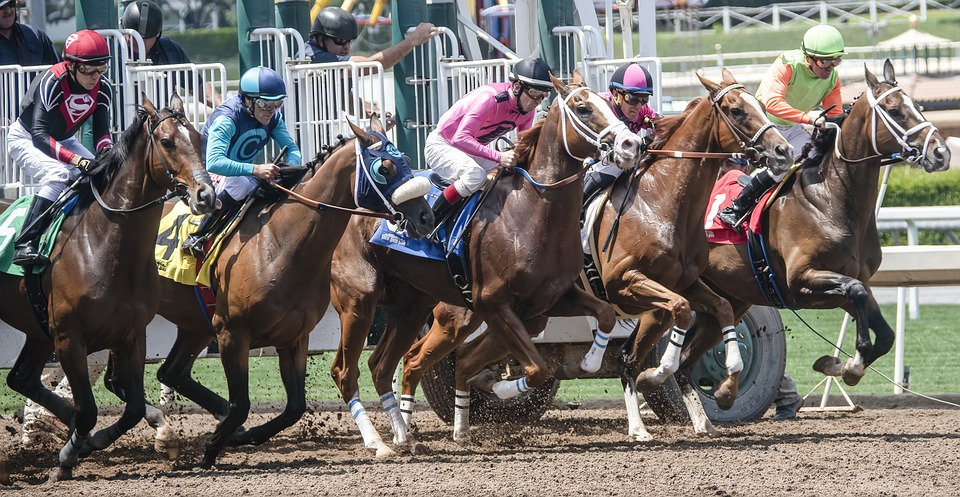 Horse deaths at Santa Anita Park