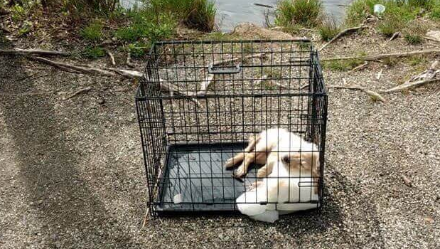 Puppy drowned in cage