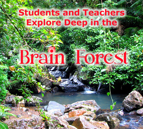 feature-aplusala-brain-forest.jpg