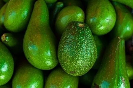 Fortune Agribusiness avocado crop