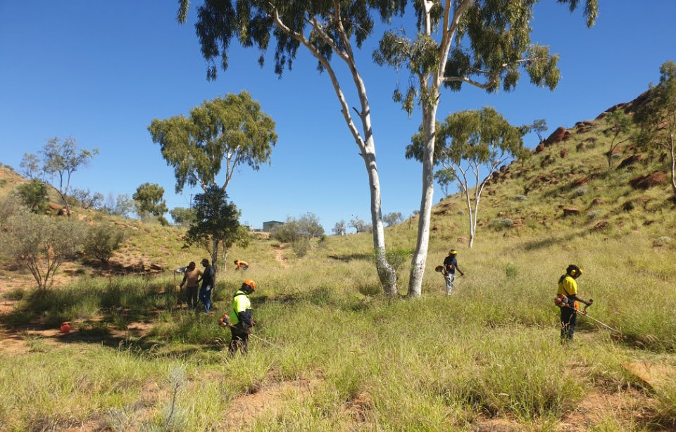 Arid Edge and Tangentyere bush care team tackling buffel grass