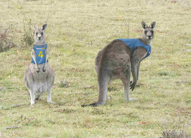 roos-in-training.jpg