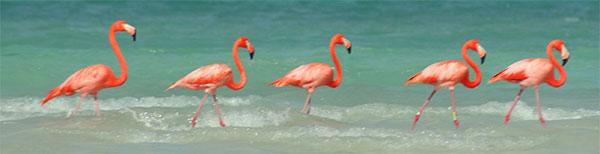 flamingoheader.jpg