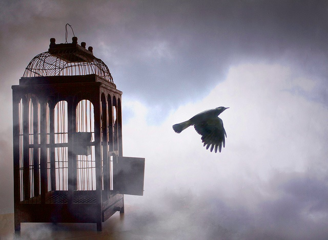 Image of birdcage with door open and black silhouette of a bird flying out of it.
