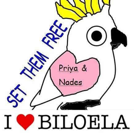 Bilo_FB_logo.jpg