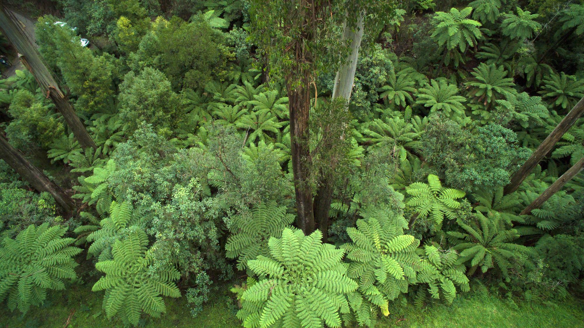 Great Dividing Range Victoria - Toolangi NP