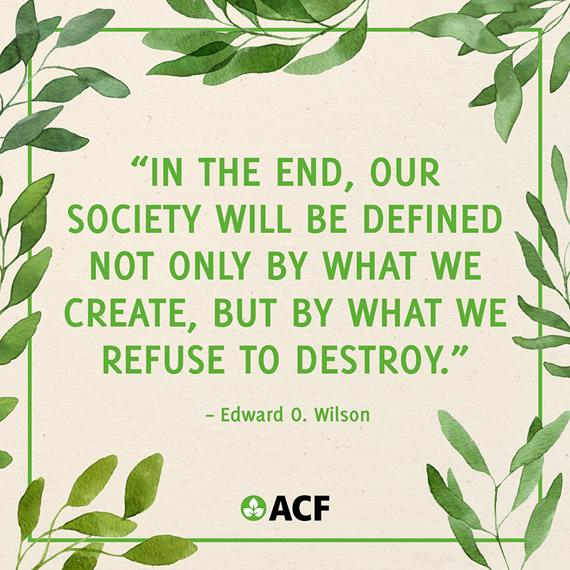 In the end, our society will be defined not only by what we create, but by what we refuse to destroy.
