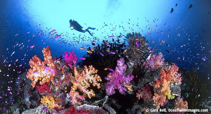 Reef_diver
