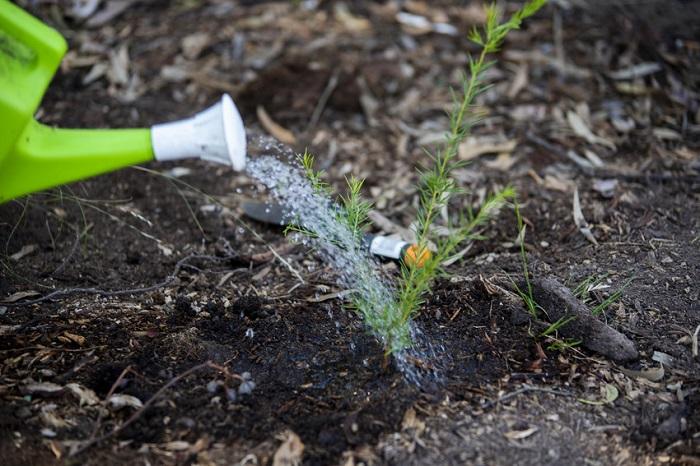 post_planting.jpg