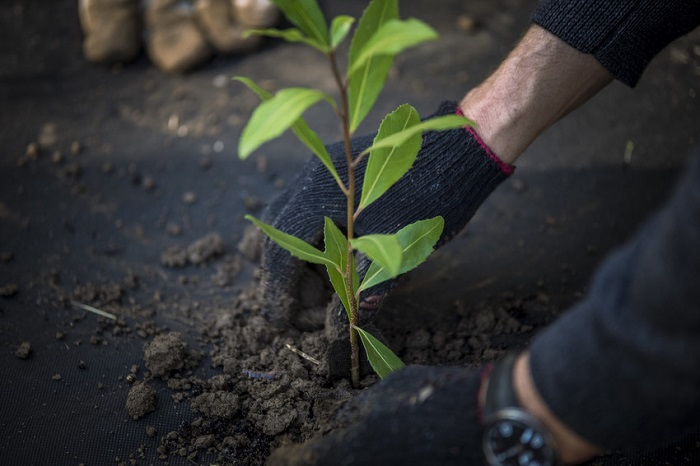post_planting2.jpg