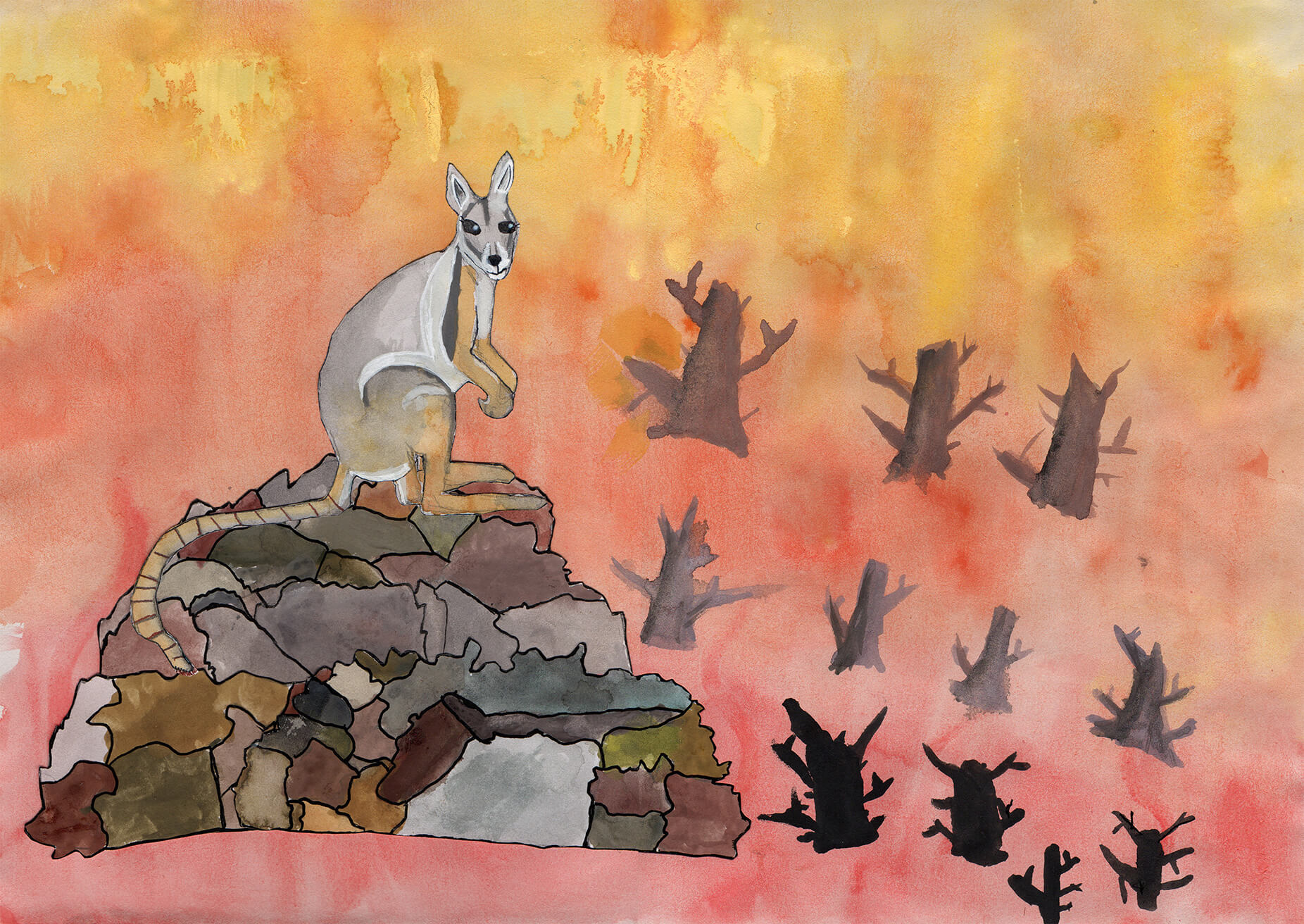 Yellow-footed rock wallaby by Lola, age 7