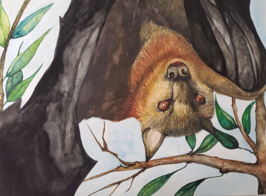 painting of a flying fox