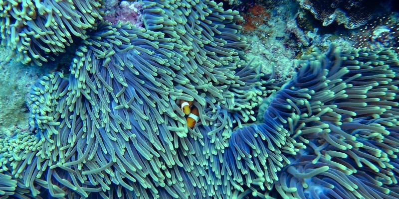 web-reef-coral-clownfish.jpg