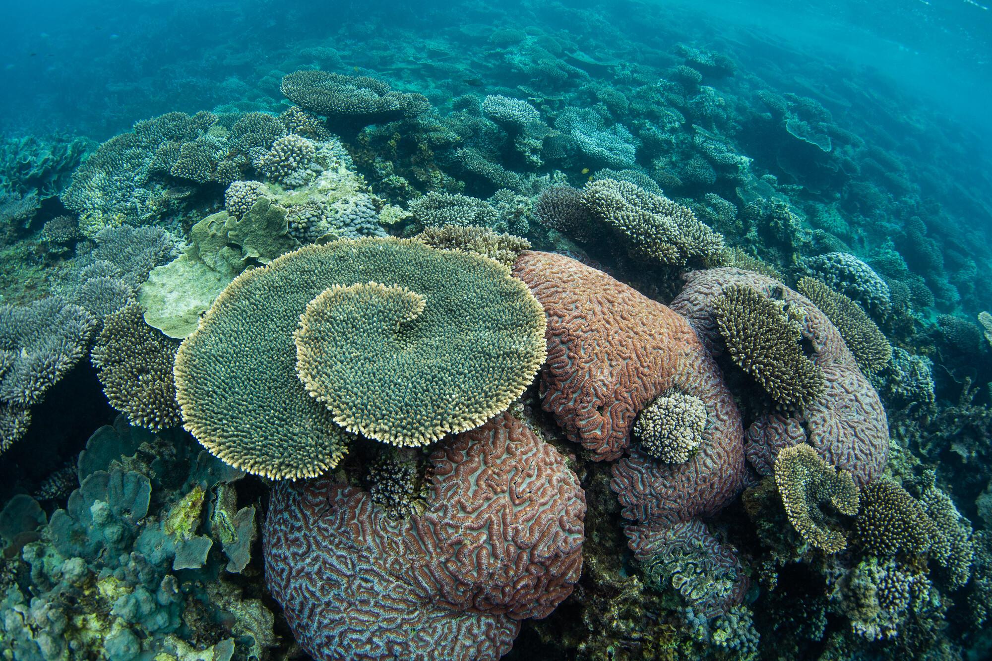 Underwater corals at ningaloo reef