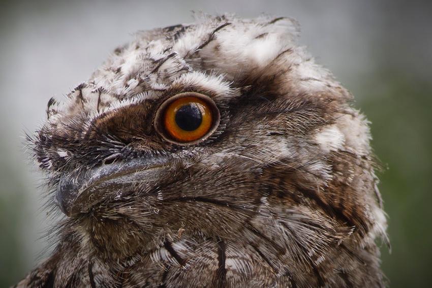post_owl.jpg