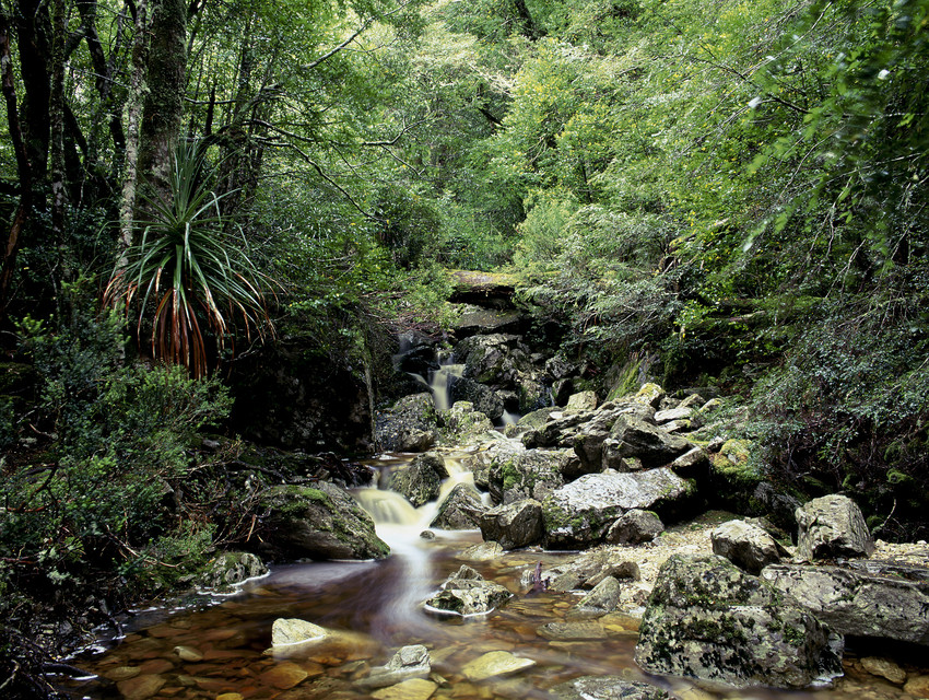 tasmania_rainforest.jpg