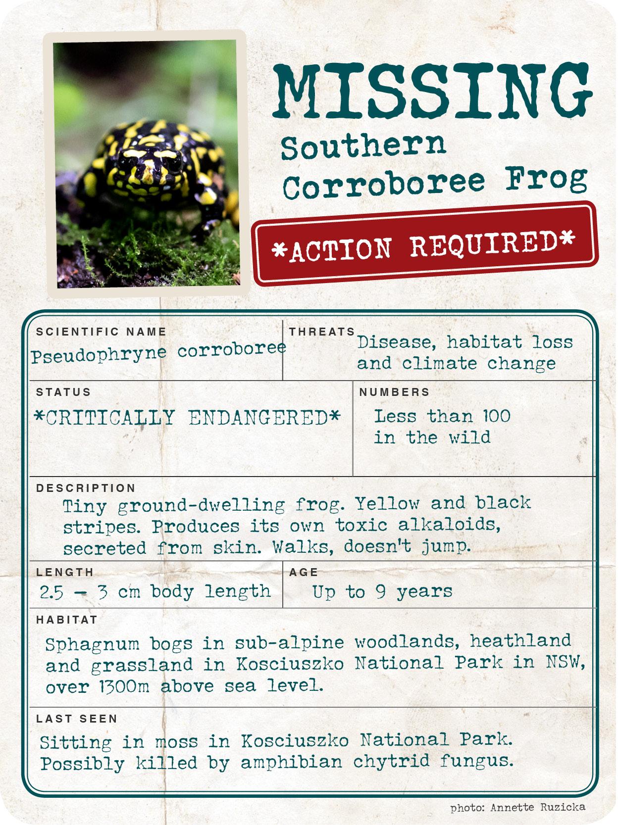 Missing_Creature_Report__600px_web_SouthernCorroboreeFrog.jpg