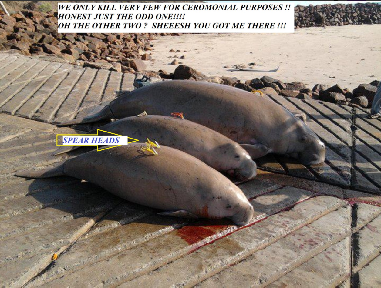 3dugongs_killed.png