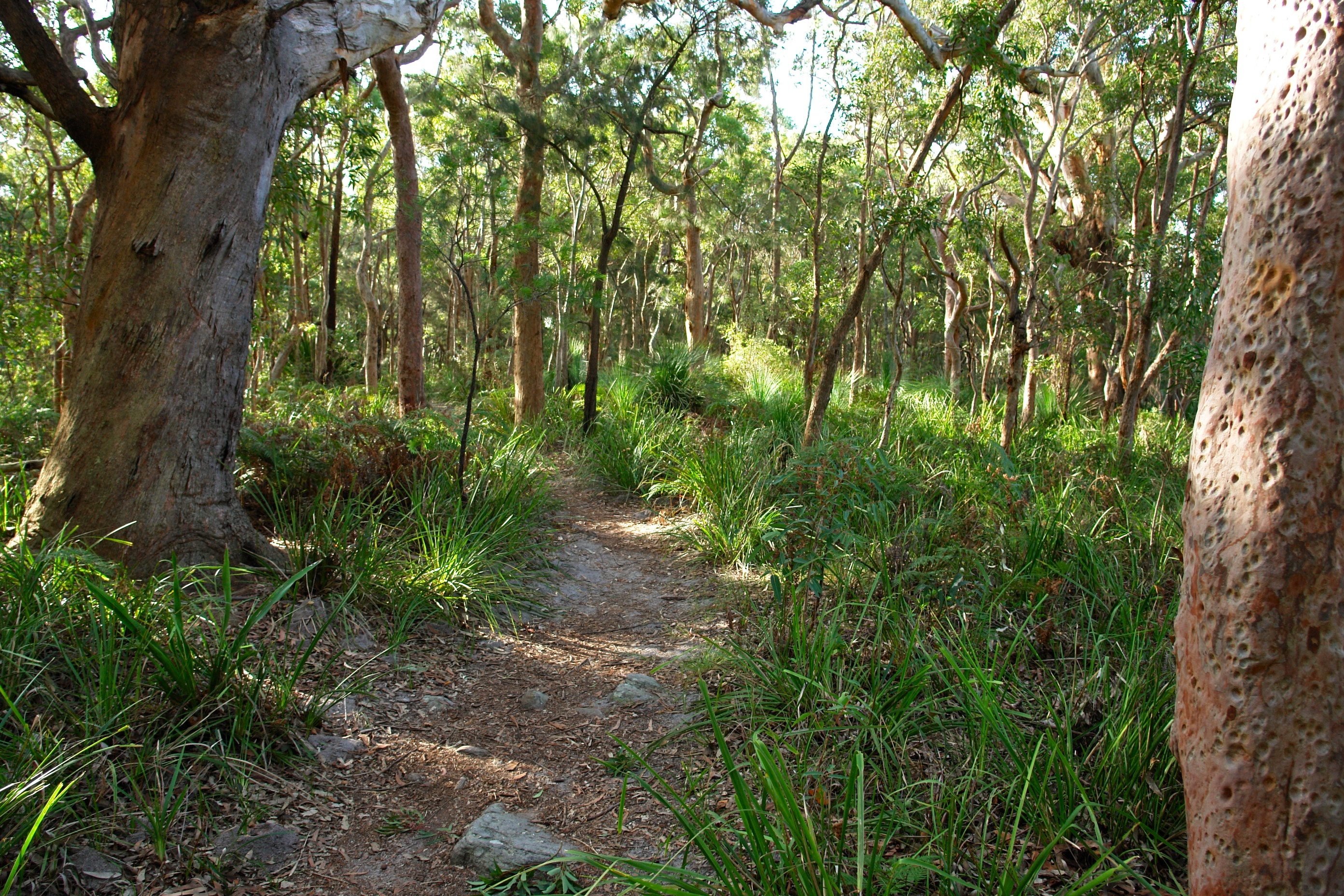 Bushland__Royal_National_Park__The_Coast_Walk-Australia.jpg