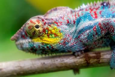 Lib_Lab_Chameleon.jpg