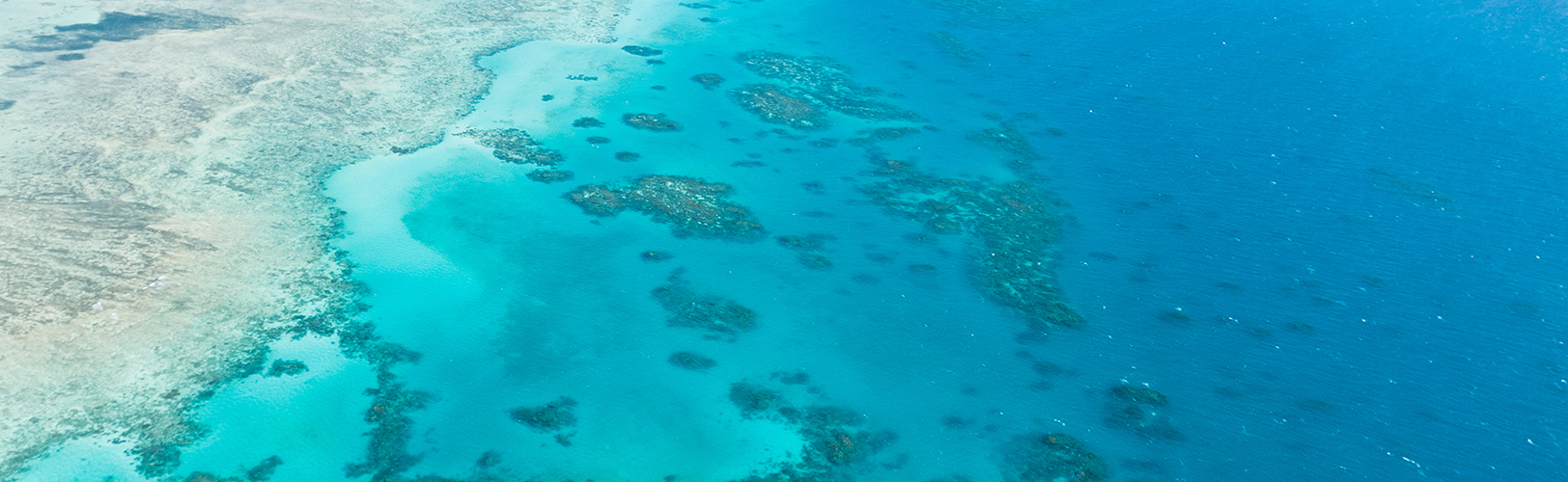 PETITION: Don't use public funds to wreck the Reef and climate.