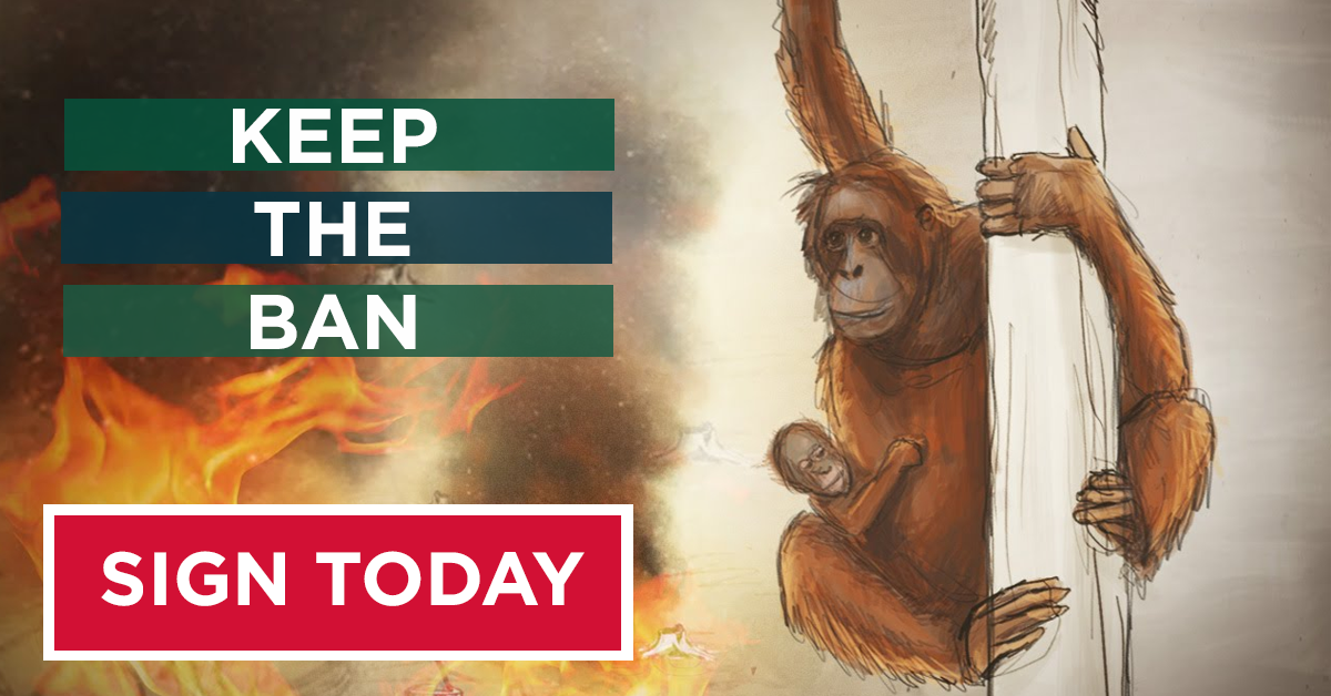Keep the ban on palm oil