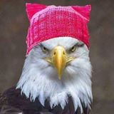 eagle_in_pussy_hat.jpg