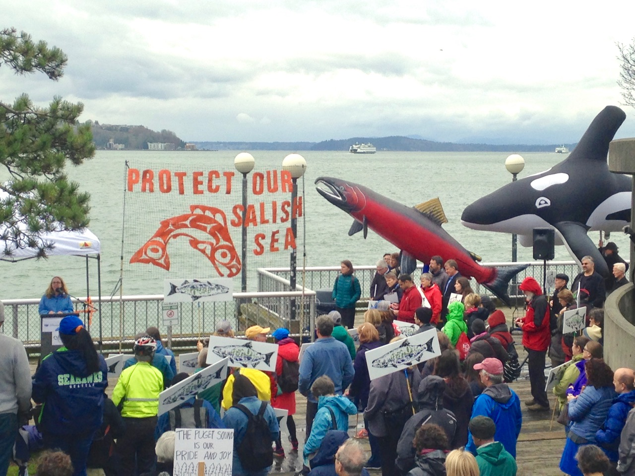 Learn how to make Giant Inflatable Puppets for Progressive causes like our Salmon and Orca from this Protect Our Salish Sea, Don't Defund the EPA Rally!