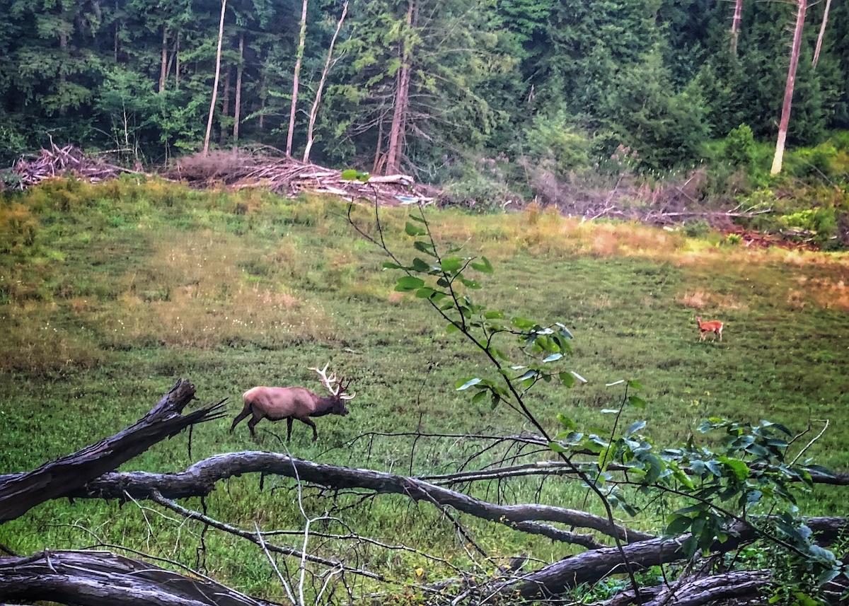 Elk_and_Deer.jpeg