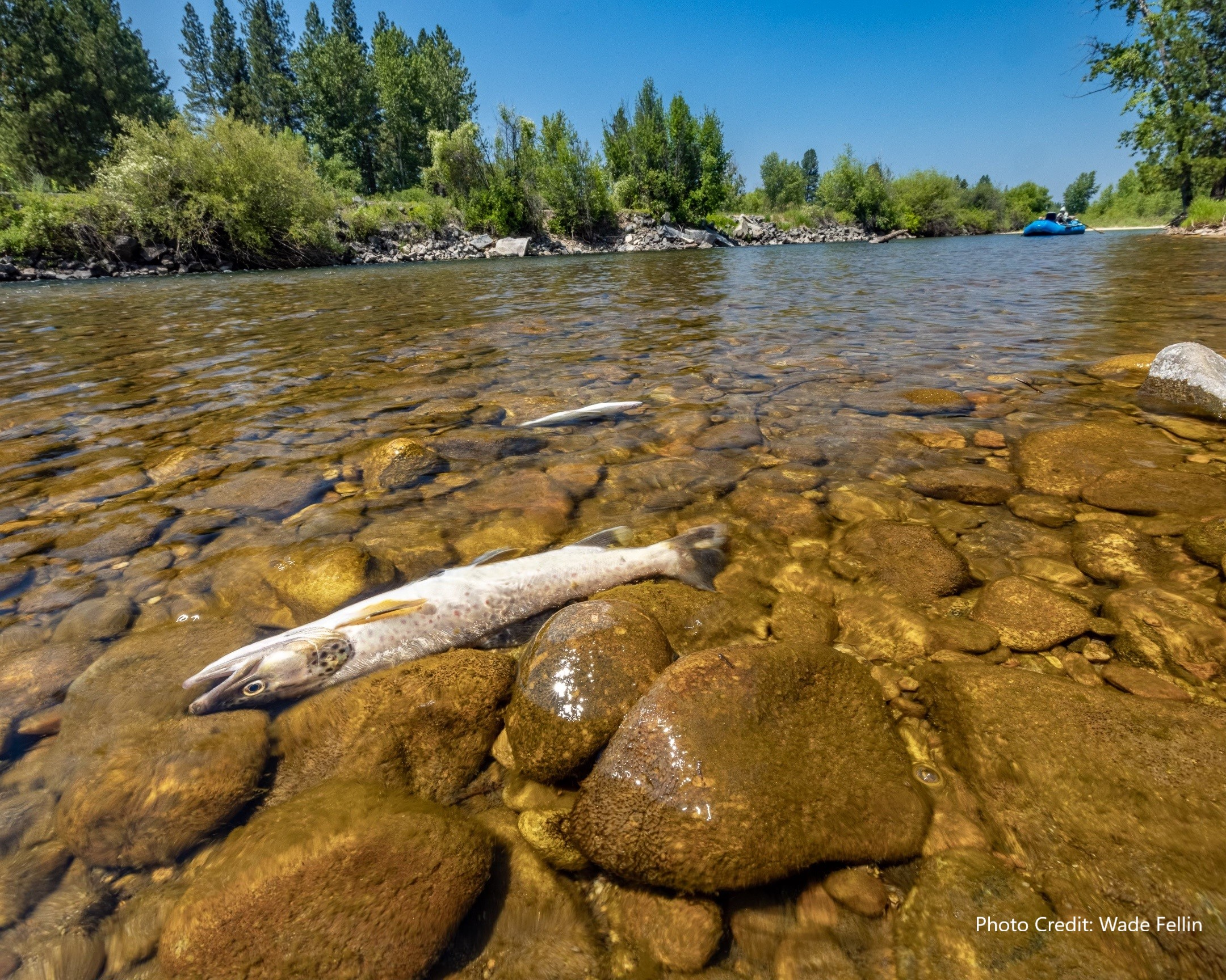 Help Save Montana's Cold Water Fisheries