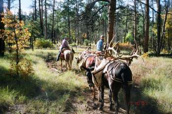 pecos elk