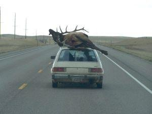 civic elk