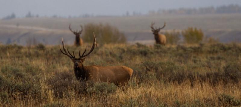Elk-habitat-lwcf-BHA.jpg