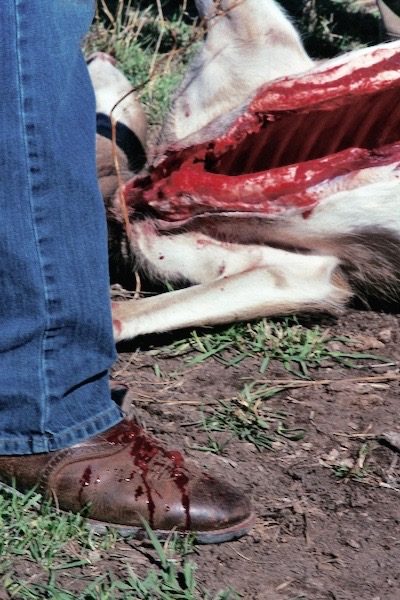 cowboy_boot_and_blood_(1).jpg